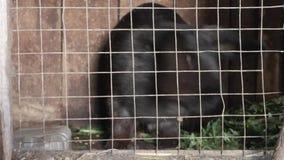 Verschiedene Kaninchen in einem Käfigabschluß oben stock video footage