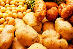 Verschiedene Kartoffeln Stockbild