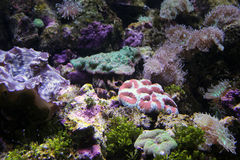 Verschiedene Korallen Lizenzfreies Stockbild