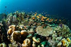 Verschiedene Korallenriffe und Fische in Gili, Lombok, Nusa Tenggara Barat, Indonesien-Unterwasserfoto Stockfotografie