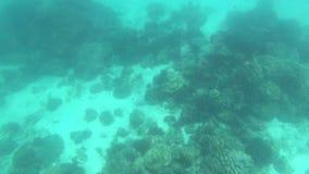 Verschiedene Korallenriffe und Fische in Thailand Unterwasser stock video footage