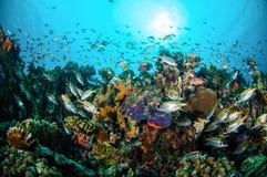 Verschiedene korallenrote Fische, Squirrelfishschwimmen über Korallenriffen in Unterwasserfoto Gili Lombok Nusa Tenggara Barats I Stockfotografie