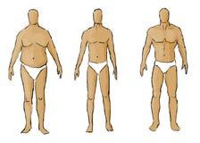 Verschiedene Körperbauten Stockbild