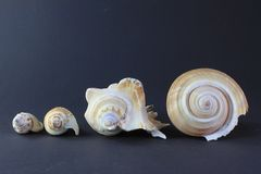 Verschiedene Muscheln in einer Linie Stockfotos