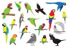 Verschiedene Papageien-Karikatur-Vektor-Illustration Stockfotografie
