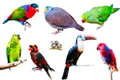 Verschiedene Papageien lokalisiert auf weißem Hintergrund Lizenzfreies Stockbild