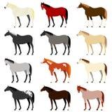 Verschiedene Pferdefarben vektor abbildung