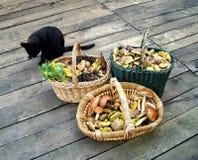 Verschiedene Pilze in den Körben mit Katze Stockfotos
