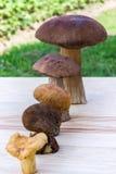 Verschiedene Pilze sind in aufsteigender Sequenz (Steinpilz, brauner Kappenboletus, Orangekappenboletus, paxil, Pfifferling) Stockfotografie