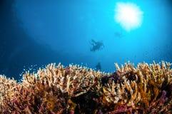 Verschiedene Rifffische schwimmen über hartem korallenrotem Acropora in Gili, Lombok, Nusa Tenggara Barat, Indonesien-Unterwasser Stockbilder