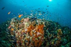 Verschiedene Rifffische schwimmen über Korallenriffen in Gili, Lombok, Nusa Tenggara Barat, Indonesien-Unterwasserfoto Stockfotos