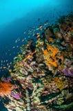 Verschiedene Rifffische schwimmen über Korallenriffen in Gili, Lombok, Nusa Tenggara Barat, Indonesien-Unterwasserfoto Lizenzfreies Stockbild
