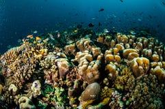 Verschiedene Rifffische schwimmen über Korallenriffen in Gili, Lombok, Nusa Tenggara Barat, Indonesien-Unterwasserfoto Lizenzfreie Stockfotografie