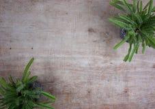 Verschiedene saftige Anlagen catus/in den Steint?pfen Minizimmerpflanzen auf h?lzernem Hintergrund mit Kopienraum f?r Ihren eigen lizenzfreie stockfotografie