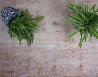 Verschiedene saftige Anlagen catus/in den Steint?pfen Minizimmerpflanzen auf h?lzernem Hintergrund mit Kopienraum f?r Ihren eigen lizenzfreies stockfoto
