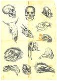 Verschiedene Schädel Stockfotos