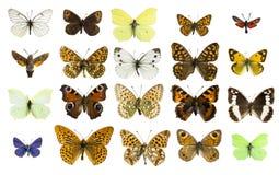 Verschiedene Schmetterlingsspezies der Collage Lizenzfreies Stockbild