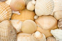 Verschiedene Seashells Lizenzfreies Stockfoto
