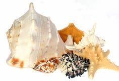 Verschiedene Seashells Stockfoto