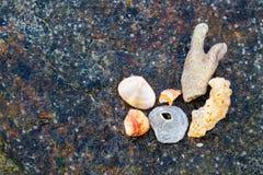 Verschiedene Shells Stockfoto