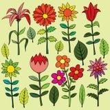 Verschiedene Sommerblumen Stockfotos