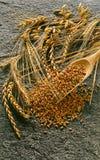 Verschiedene Sortierungen der Getreide Stockfoto