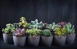 Verschiedene Succulents Stockbild