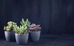 Verschiedene Succulents Lizenzfreie Stockfotos