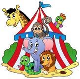 Verschiedene Tiere im Zirkuszelt Stockfotos