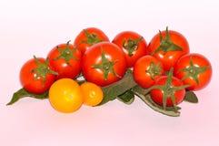 Verschiedene Tomaten auf weißem Hintergrund Stockbilder