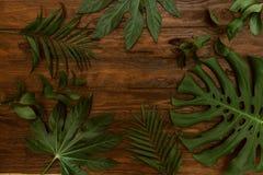 Verschiedene tropische Blätter Draufsicht, Monstera-Blatt, Palmblätter Stockfotografie