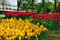Verschiedene Tulpen im Park Stockbilder