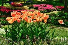 Verschiedene Tulpen im Park Stockfotografie