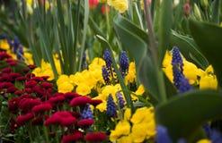 Verschiedene verschiedene Blumen mit kräftigen Farben im hellen Sommer beleuchten Lizenzfreies Stockfoto