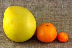 Verschiedene Zitrusfrucht Stockfotos
