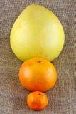 Verschiedene Zitrusfrucht Stockbild