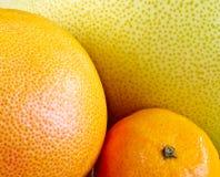 Verschiedene Zitrusfrucht Lizenzfreie Stockfotos