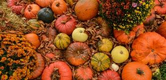 Verschiedene Zusammenstellung von Kürbisen auf Hintergrund Autumn Harvest Lizenzfreies Stockfoto