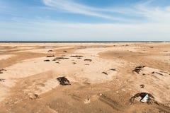 Verschiedener Abfall auf der sandigen Küste geworfen Meereswogen Mit gelbem Sand und blauer Himmel Fokus in Richtung zu den niedr Stockbilder