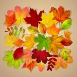 Verschiedener Herbstlaub auf beige Hintergrund lizenzfreie abbildung