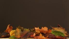 Verschiedener Herbstlaub gegen einen dunklen Hintergrund lizenzfreies stockfoto