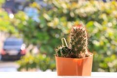 Verschiedener Kaktus stockbild