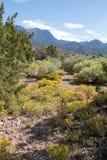Verschiedener Kaktus mit einer erstaunlichen Ansicht der Berge und des Himmels Stockfoto
