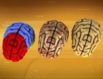 Verschiedenes Gehirn drei Stockbild