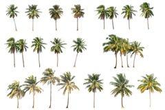 Verschil van kokospalm op wit wordt geïsoleerd dat stock foto's