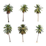 Verschil van kokospalm op wit wordt geïsoleerd dat stock afbeeldingen