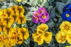 Verschillend soort gekleurde bloemen stock afbeelding