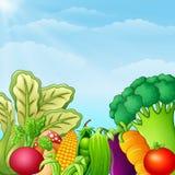 Verschillend soort groentenillustratie royalty-vrije illustratie