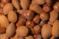 Verschillend type van noten Stock Afbeeldingen