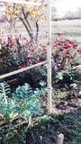 Verschillende bloemen dichtbij de omheining Royalty-vrije Stock Afbeeldingen